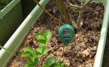 百合种植怎么土壤选择及整理的2个方法