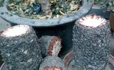 我的铁树下山桩砍头了 能长多头吗