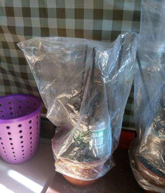 榆树下山桩怎么套袋保湿的方法