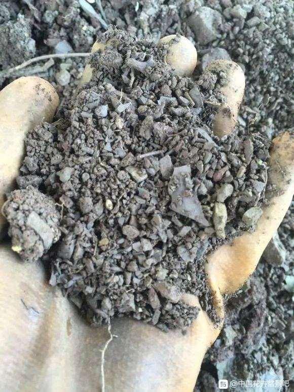栽种下山桩的怎么培植土和伤口的处理