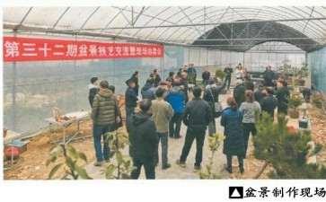 2020年 贵州湄潭第32期盆景现场制作交流会