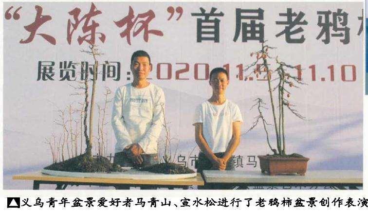 义乌市大陈杯老鸦柿盆景展