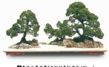 浅谈贵州山水盆景的发展前途有多大