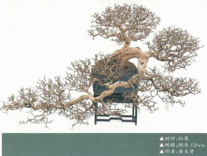 树桩盆景个性特征的应用规律
