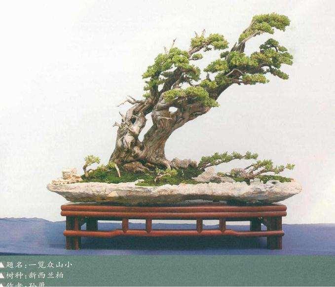 树桩盆景构成因素的组合规律