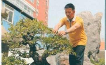 闽南盆景后继有人 第31集 图片