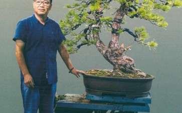 图解 徐昊怎么制作黑松盆景的23个过程