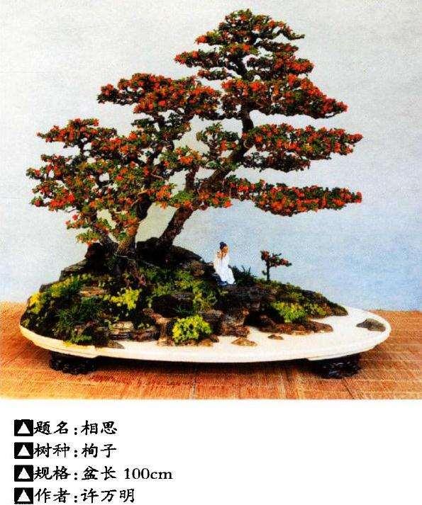 花木盆景杂志社将迎来第600期杂志