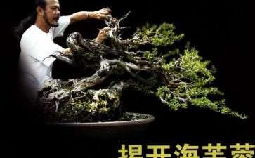 图解 印尼大师制作海芙蓉盆景的过程