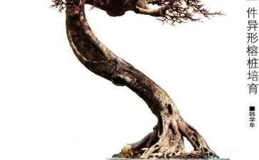 图解 韩学年怎么培育榕树盆景的方法