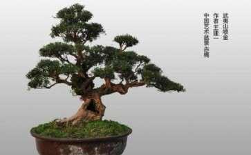 赤楠盆景怎么换盆的3个方法