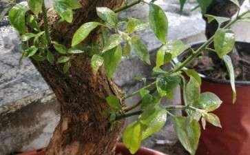 小叶紫下山桩生桩 今年发芽了 图片