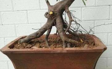 金弹子下山桩生桩生根发芽的条件是什么