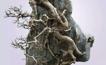 附石盆景怎么石树盆配置的方法
