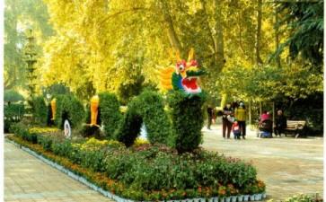 郑州市人民公园举办彩菊暖秋菊花展