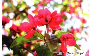北京植物园国家海棠种质资源库