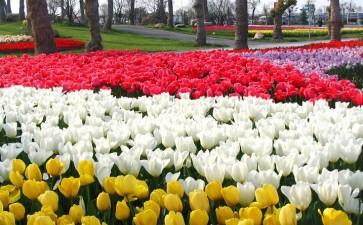 2020年4月上海花卉行情报告