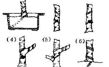 盆景金属丝怎么蟠扎的3个方法