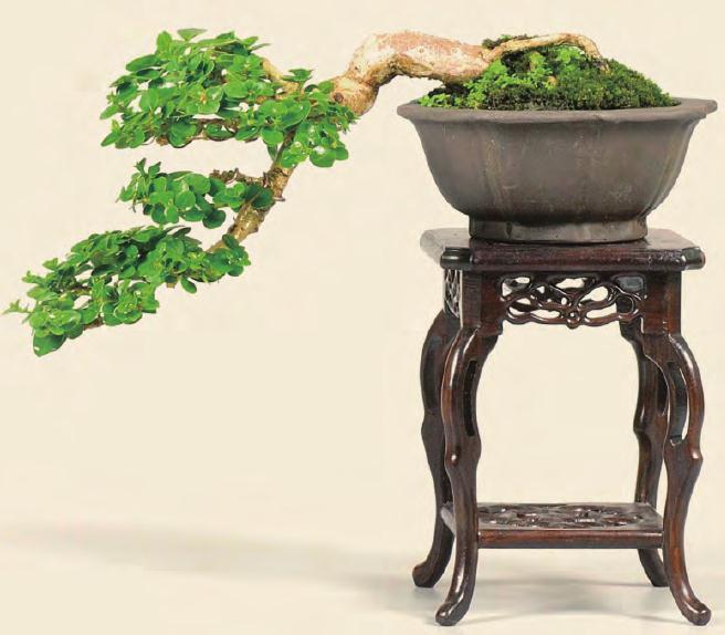 中国盆景艺术家协会成立专业委员会之我见
