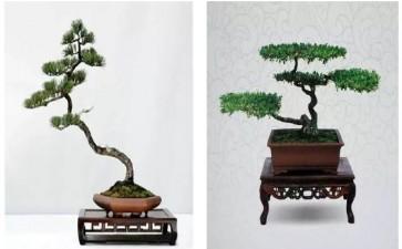赵庆泉和他的扬派盆景艺术