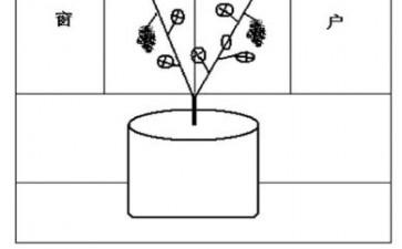 葡萄盆栽的架式和整形方法