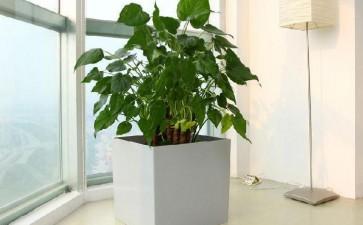 室内植物盆栽观赏特性有哪些
