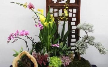 怎么追求室内盆栽植物品质管理