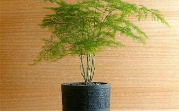 室内盆栽怎么换盆翻盆的2个方法