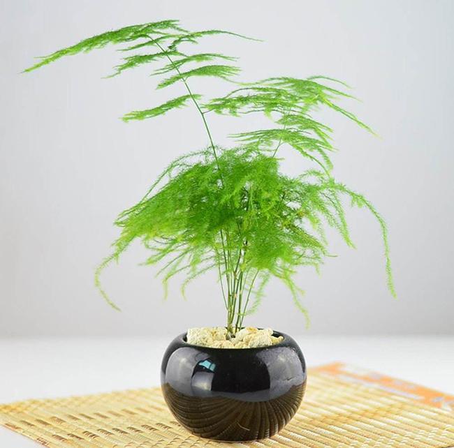 室内盆栽怎么整形修剪