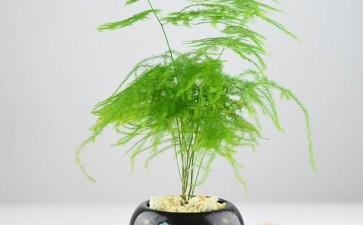 室内盆栽怎么整形修剪的3个方法