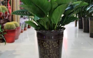 室内盆栽植物常见的6种病虫害