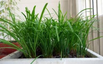 蚯蚓粪生物有机肥在盆栽蔬菜中的应用