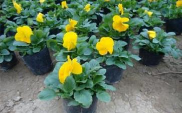 对青州盆栽花卉怎么发展的5个建议