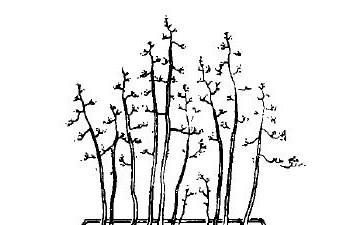 图解 高耸丛林式盆景怎么造型的4个方法