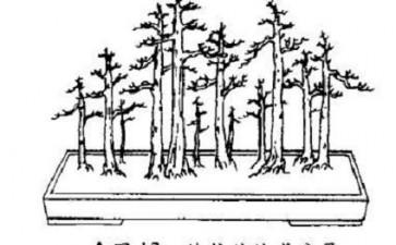 图解 健壮丛林式盆景怎么造型的4个方法