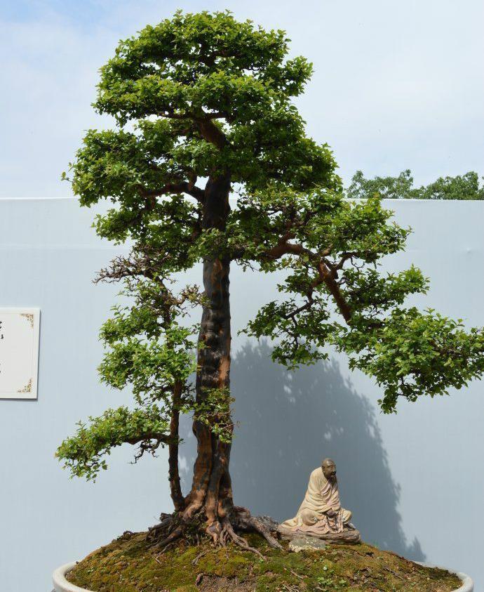 树木盆景夏季怎么遮荫防虫