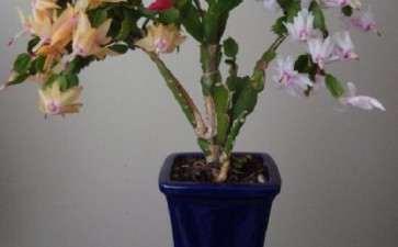 生物技术在盆景植物新品种培育中的应用