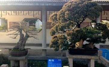 上海盆景园植物景观改造工程的概况