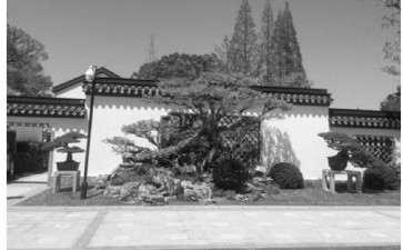 上海盆景园植物景观怎么改造的7个分析