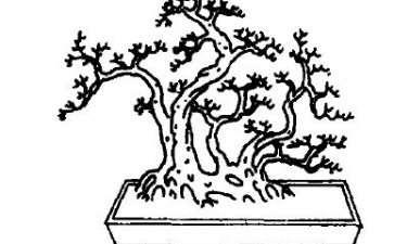 图解 曲干丛林式盆景怎么配盆造型的方法