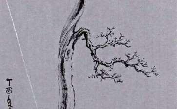 图解 三种盆景造型的第一出枝