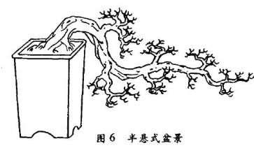 半悬崖式盆景怎么配盆造型的4个方法