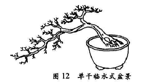 单干临水式盆景怎么配盆造型