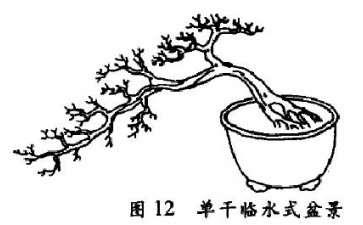 单干临水式盆景怎么配盆造型的4个方法