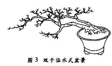 双干临水式盆景怎么配盆造型