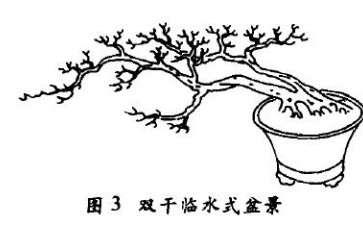 双干临水式盆景怎么配盆造型的4个方法