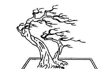 双干风动式盆景怎么配盆造型的4个方法
