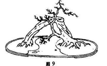 单树过桥式盆景怎么配盆造型的4个方法