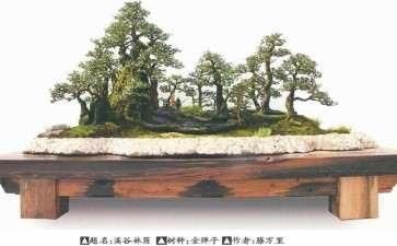 蓬勃发展的贵州遵义金弹子盆景