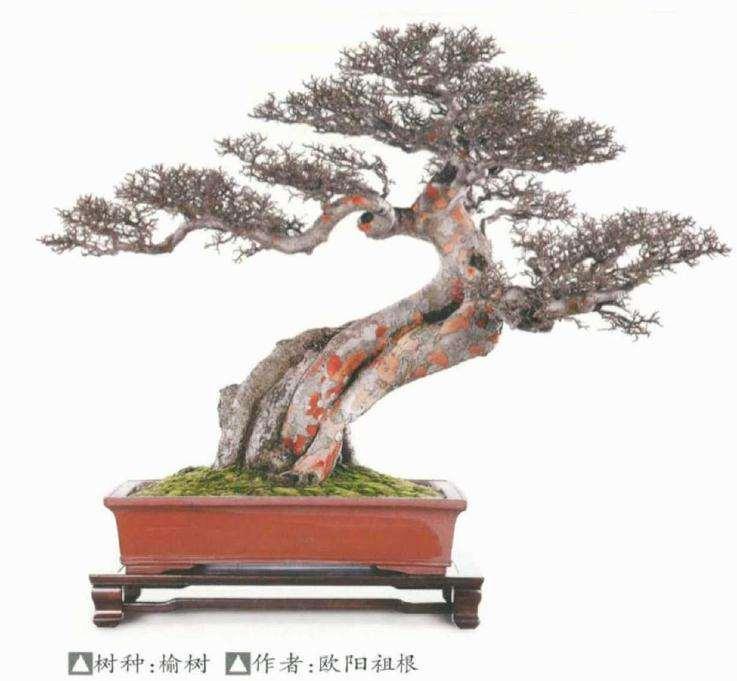 榆树盆景成型后怎么翻盆换土